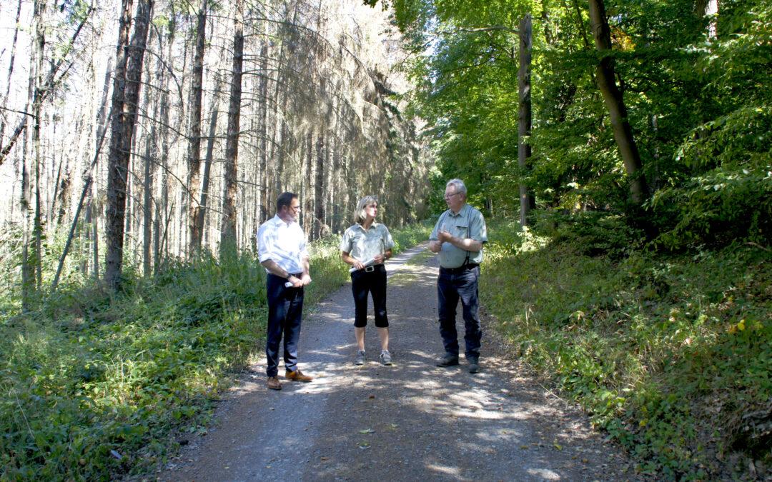 """""""Waldsterben 2.0 verhindern!"""" – Dr. Alexander Wilhelm unterwegs im Forstrevier Rhens (Pressemitteilung)"""